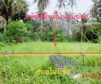 ที่ดินว่างเปล่าหลุดจำนอง ธ.ธนาคารกสิกรไทย เกาะพะงัน เกาะพะงัน สุราษฎร์ธานี